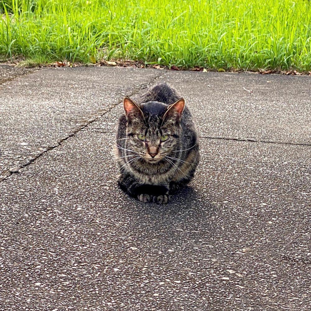 #cat #cats #猫